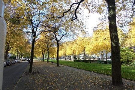 Apollolaan autumn